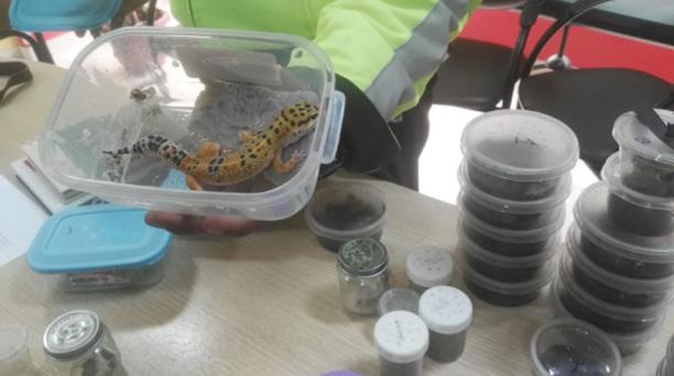 Los animales, procedentes de medio oriente, fueron hallados en el interior de un basurero en el puente de Rumiuchaca tras una denuncia. Foto: cortesía Ministerio del Ambiente.