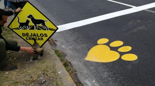 La Secretaría de Inclusión de Quito presentó este martes 23 de julio del 2019 el primero de 24 'pasos peatonales' para perros que forman parte de la campaña Déjalos Cruzar. Foto: Twitter/@ObrasQuito.