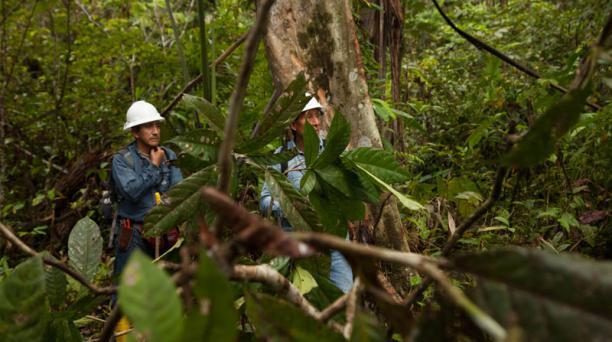 Dos técnicos de la petrolera estatal Petroamazonas recorren una parte del área del bloque 43 ITT (foto).