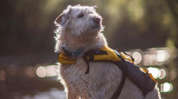 El medio estadounidense The Hollywood Reporter confirmó que se está produciendo una película sobre Arthur, el perro aventurero ecuatoriano. Foto: Instagram/ mikaellindnord.