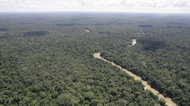 El 59% del territorio de Brasil todavía está compuesto por zonas de bosques.