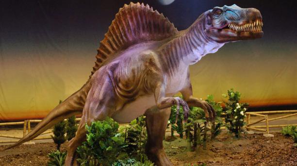 El spinosaurus pudo ser el más grande de todos los dinosaurios carnívoros, con una longitud estimada de 12 metros y un peso de hasta 9 toneladas. Foto: mundojurasicoecuador.com