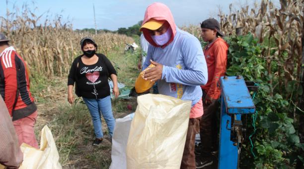 Nelly Morán supervisa el trabajo de sus obreros en su propiedad, en Pedro Carbo. Foto: Mario Faustos / EL COMERCIO