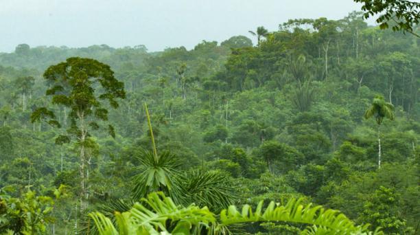 La selva amazónica es uno de los ecosistemas que influye en la alta biodiversidad. Foto: EL COMERCIO