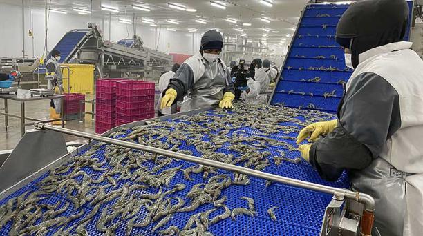 Planta camaronera de Santa Priscila. La actividad acuícola crecerá 8,3% el 2021. Foto: archivo / EL COMERCIO