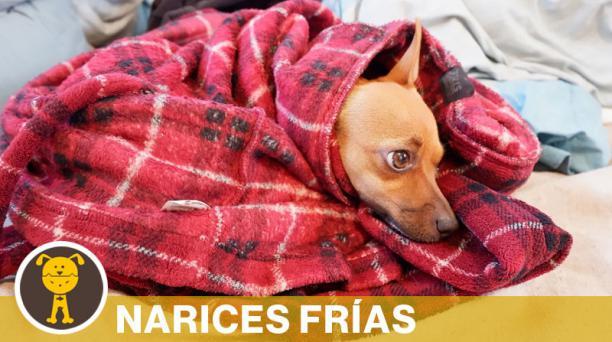 Las mascotas, al igual que los humanos, también son afectadas al exponerlas a las bajas temperaturas