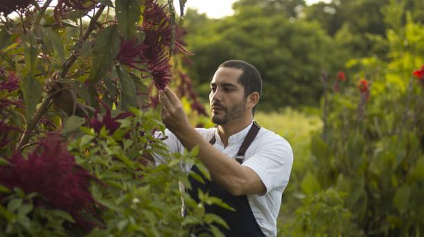 La cocina de Pacheco se caracteriza por la frescura, con productos obtenidos del mar y de un bosque comestible. Foto: Cortesía /  Rodrigo Pacheco