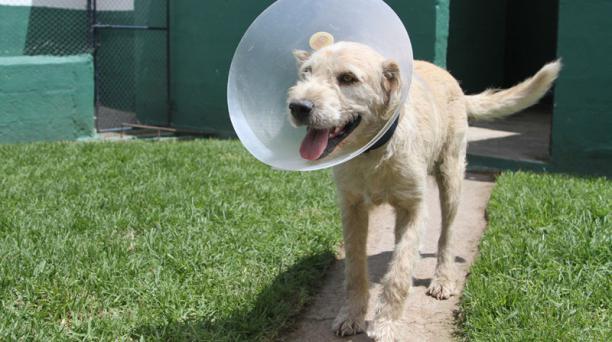 Arthur el perro que conquistó el corazón de un equipo de aventura. Foto: Jenny Navarro / EL COMERCIO