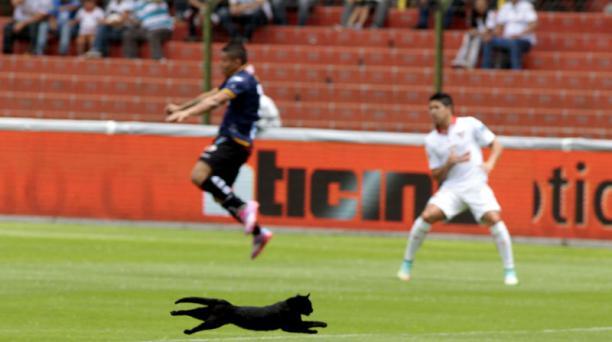 Un gato negro ingresó en la cancha de la Casa Blanca en el partido entre Liga de Quito e Independiente del Valle, el 30 de noviembre de 2014. Al final, los albos derrotaron 2-0 a los rayados. Foto: EL COMERCIO