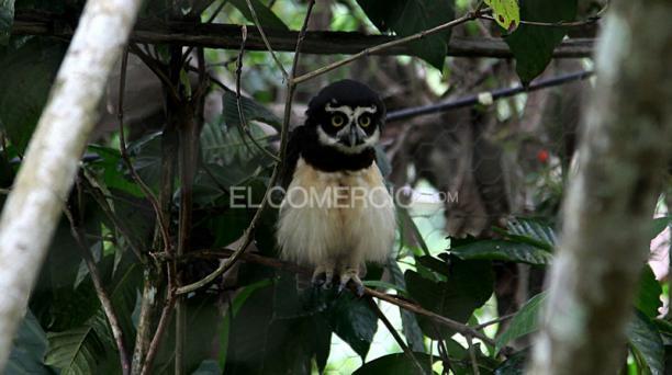 Zoológico Santo Domingo